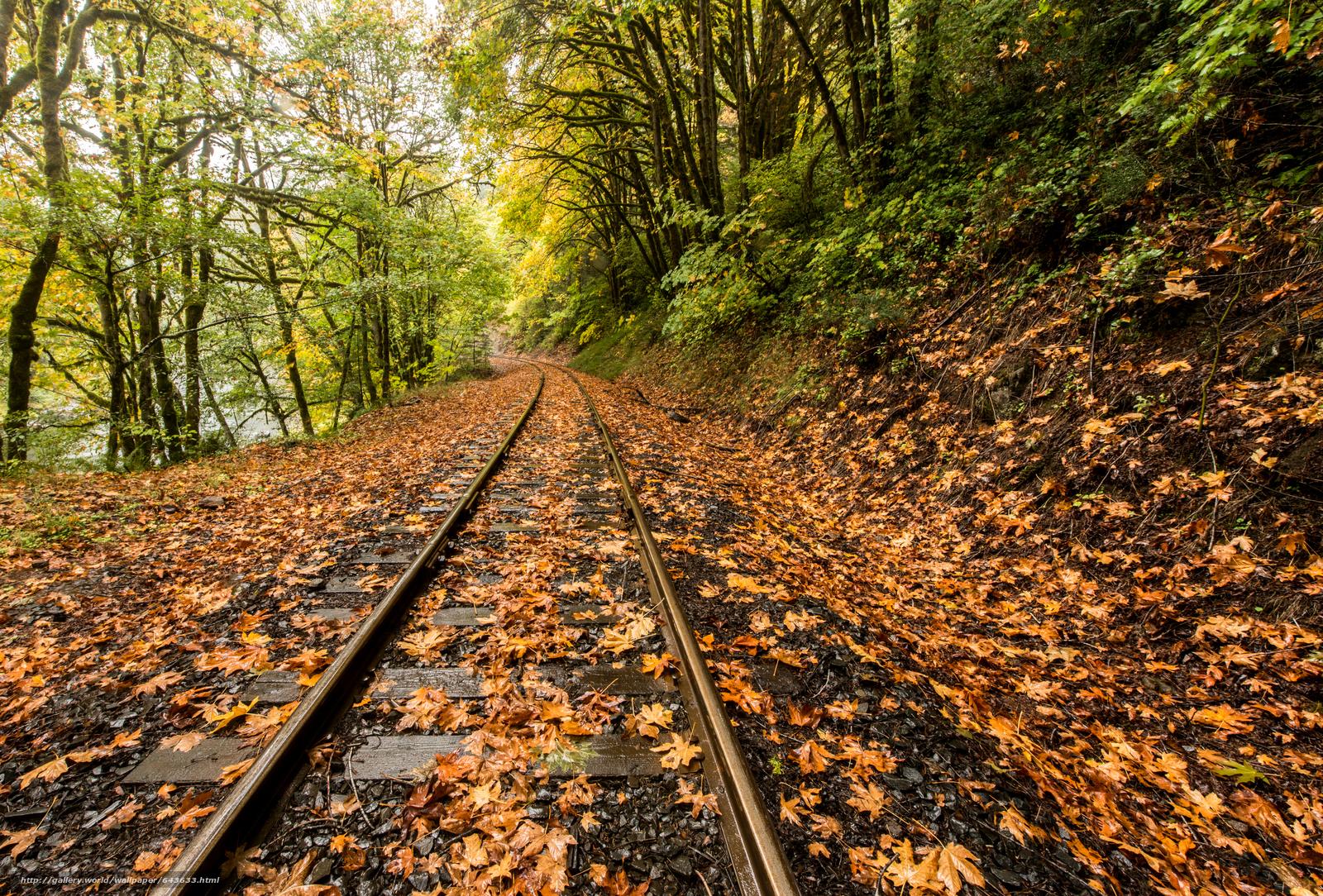 Скачать обои Дождь,  листья,  река,  железная дорога бесплатно для рабочего стола в разрешении 6786x4596 — картинка №643633