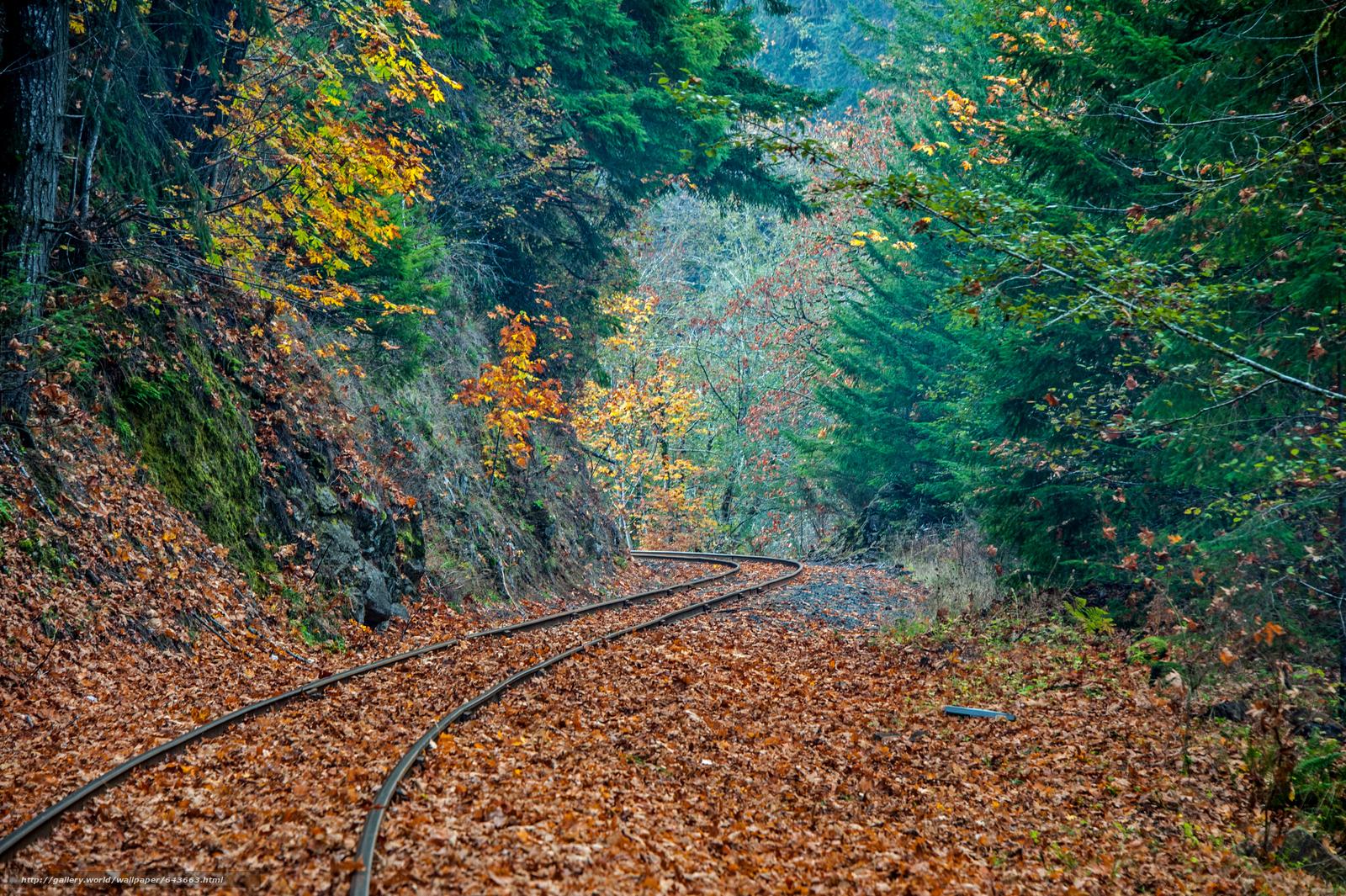 Скачать обои железная дорога,  лес,  деревья,  осень бесплатно для рабочего стола в разрешении 4256x2832 — картинка №643663