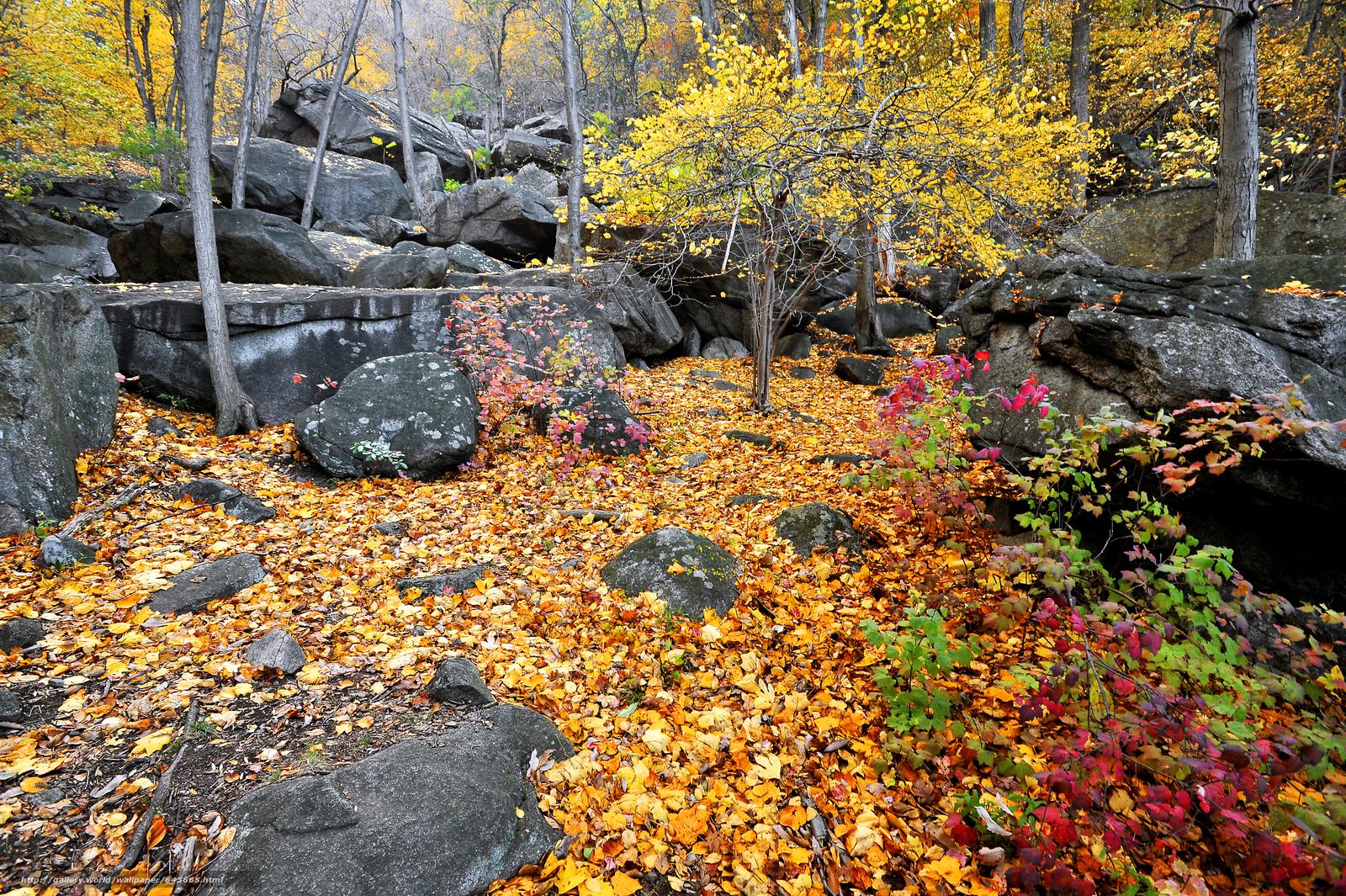 下载壁纸 熊山州立公园,  秋,  森林,  树 免费为您的桌面分辨率的壁纸 4256x2832 — 图片 №643665