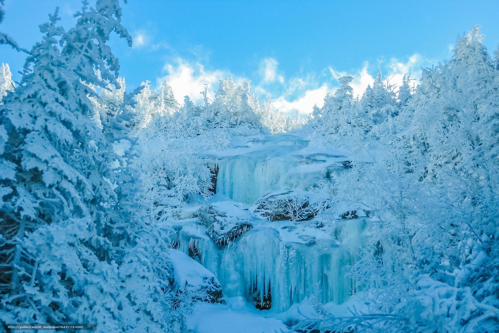 Скачать обои зима,  лес,  небо,  деревья бесплатно для рабочего стола в разрешении 2048x1368 — картинка №643723