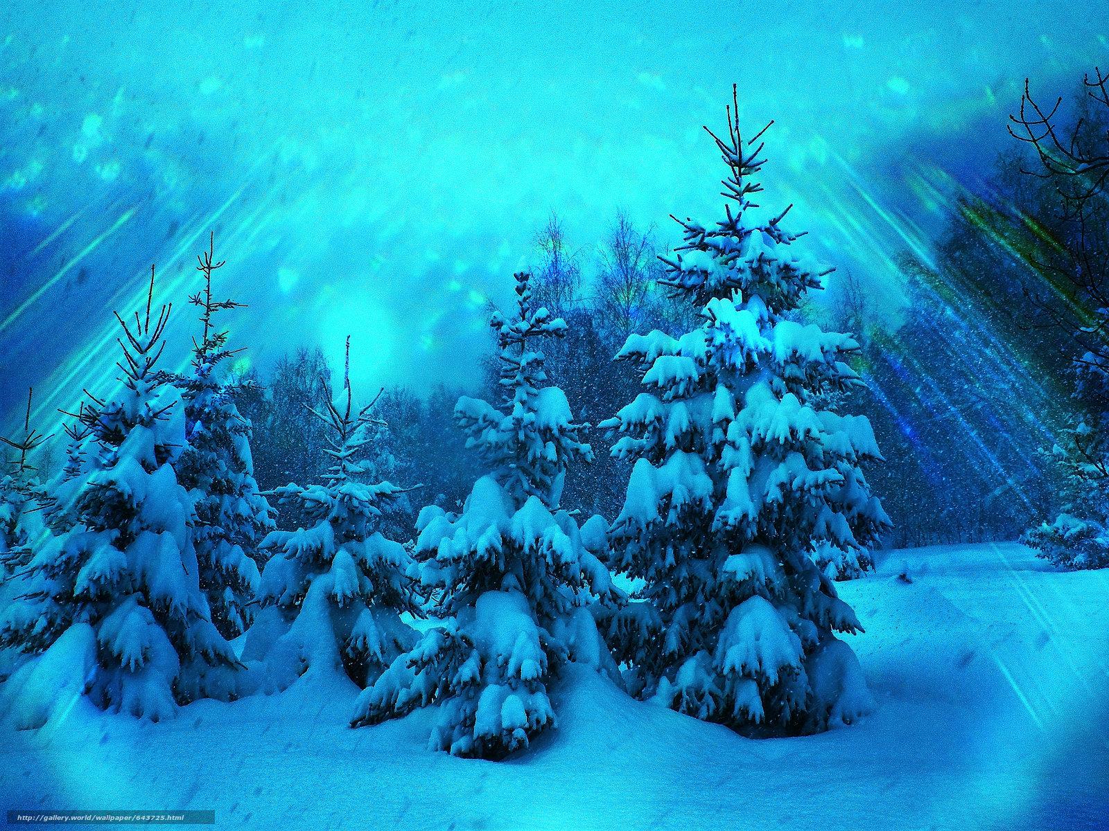 Скачать обои зима,  лес,  деревья,  ели бесплатно для рабочего стола в разрешении 3968x2976 — картинка №643725
