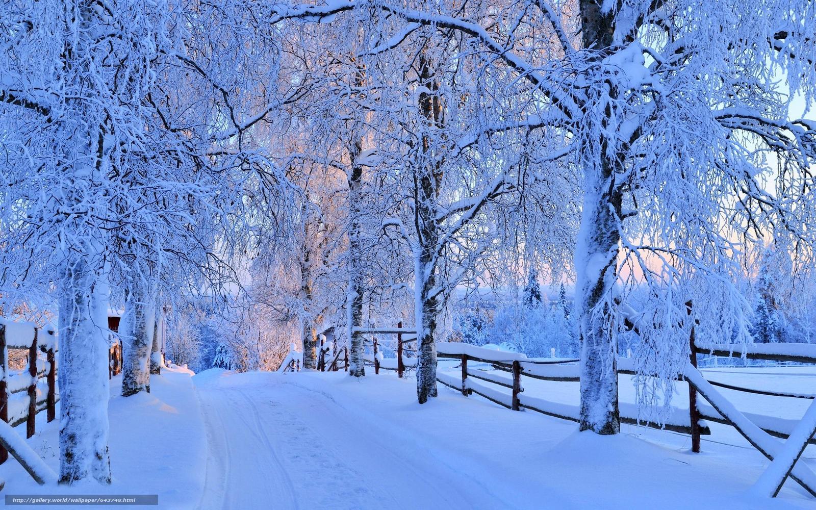 Скачать обои зима,  дорога,  деревья,  пейзаж бесплатно для рабочего стола в разрешении 2560x1600 — картинка №643748