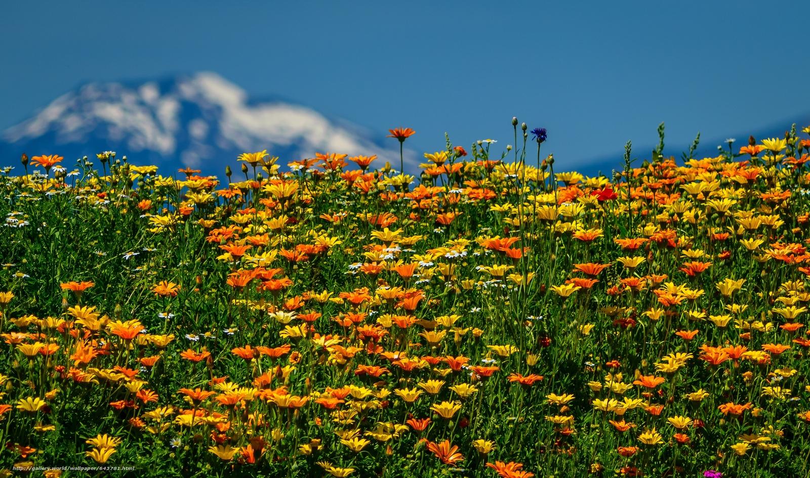 Красивые обои на рабочий стол полевые цветы 6