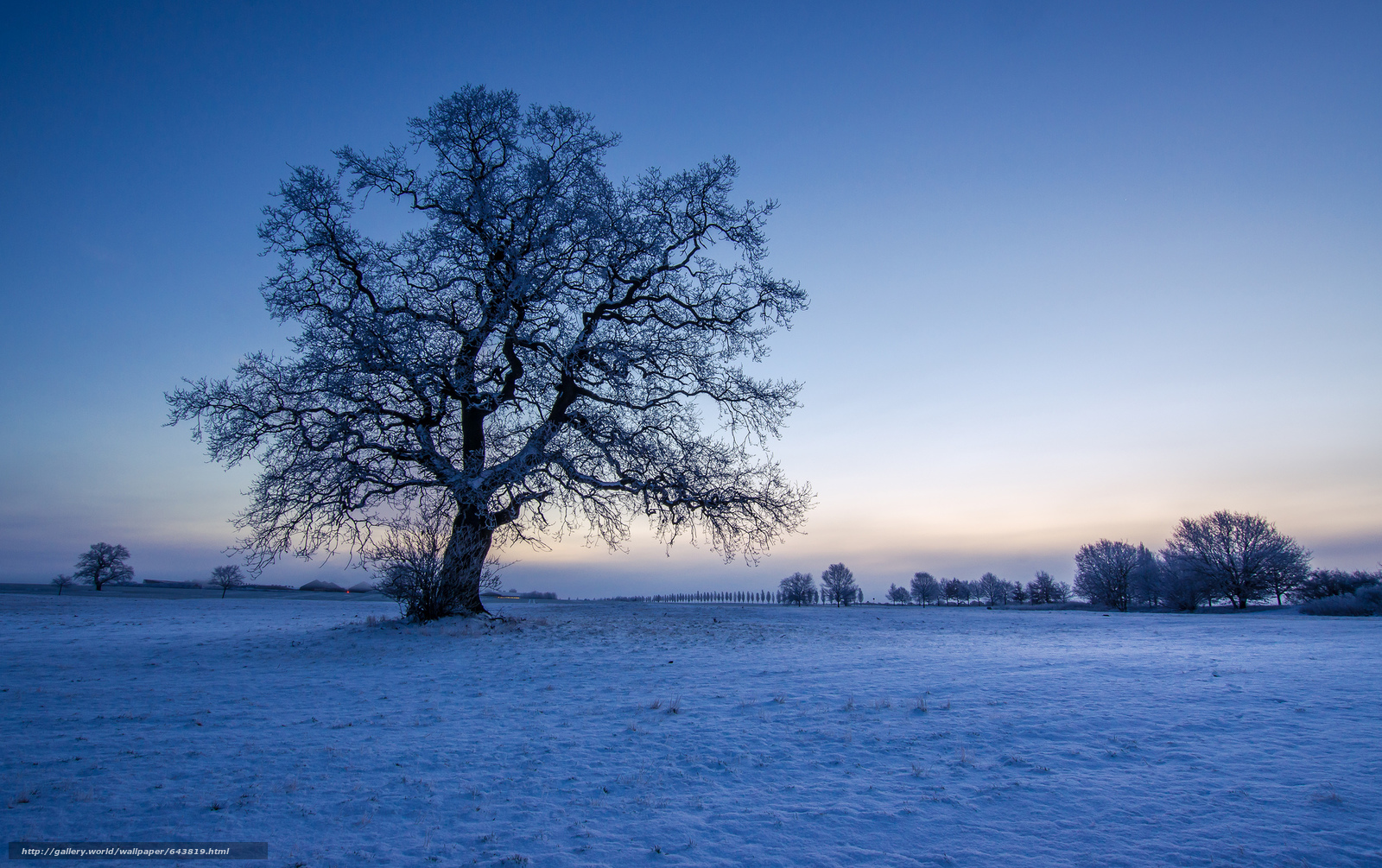Download wallpaper winter,  sunset,  field,  tree free desktop wallpaper in the resolution 2048x1286 — picture №643819