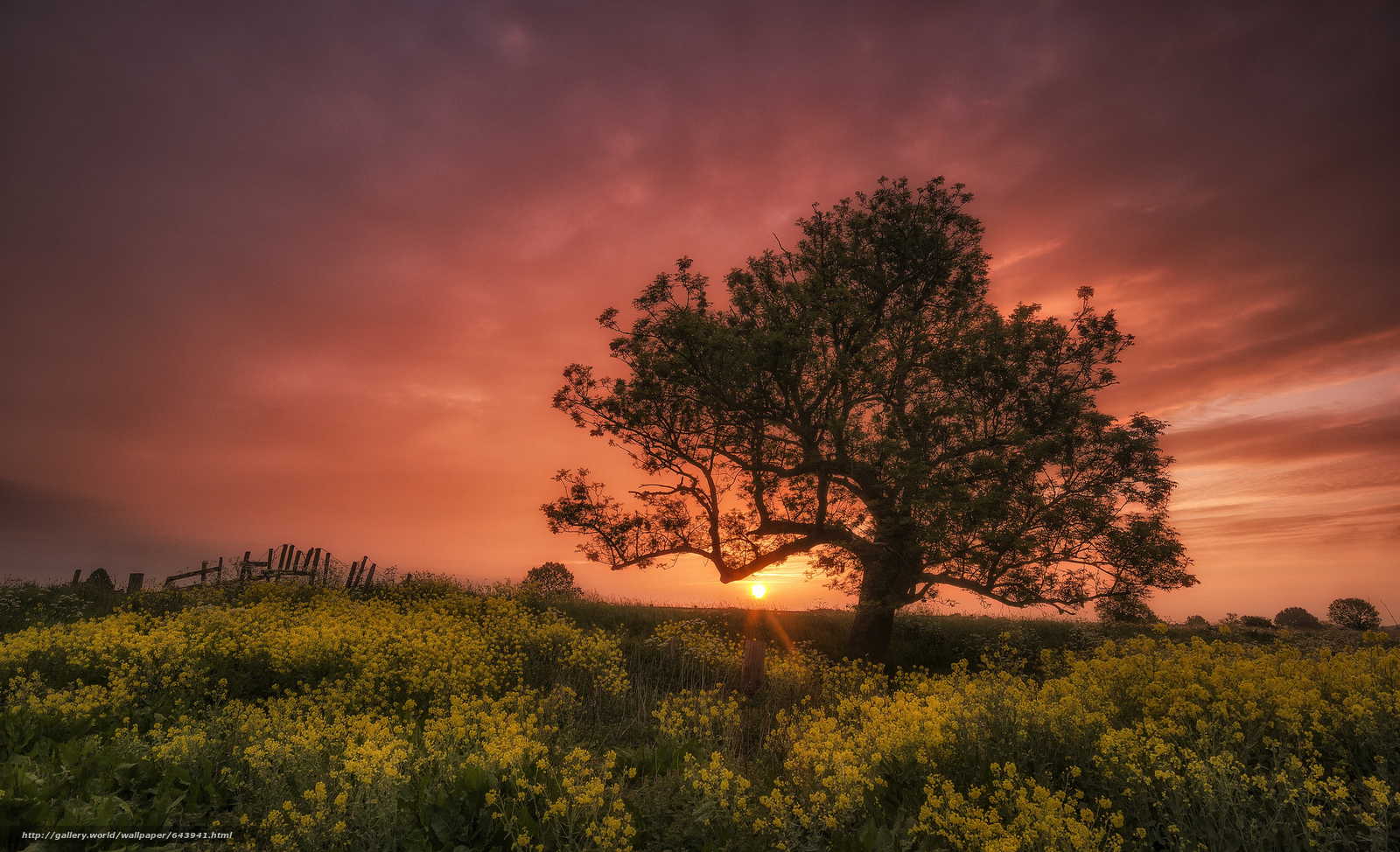 Скачать обои закат,  поле,  цветы,  дерево бесплатно для рабочего стола в разрешении 2048x1247 — картинка №643941
