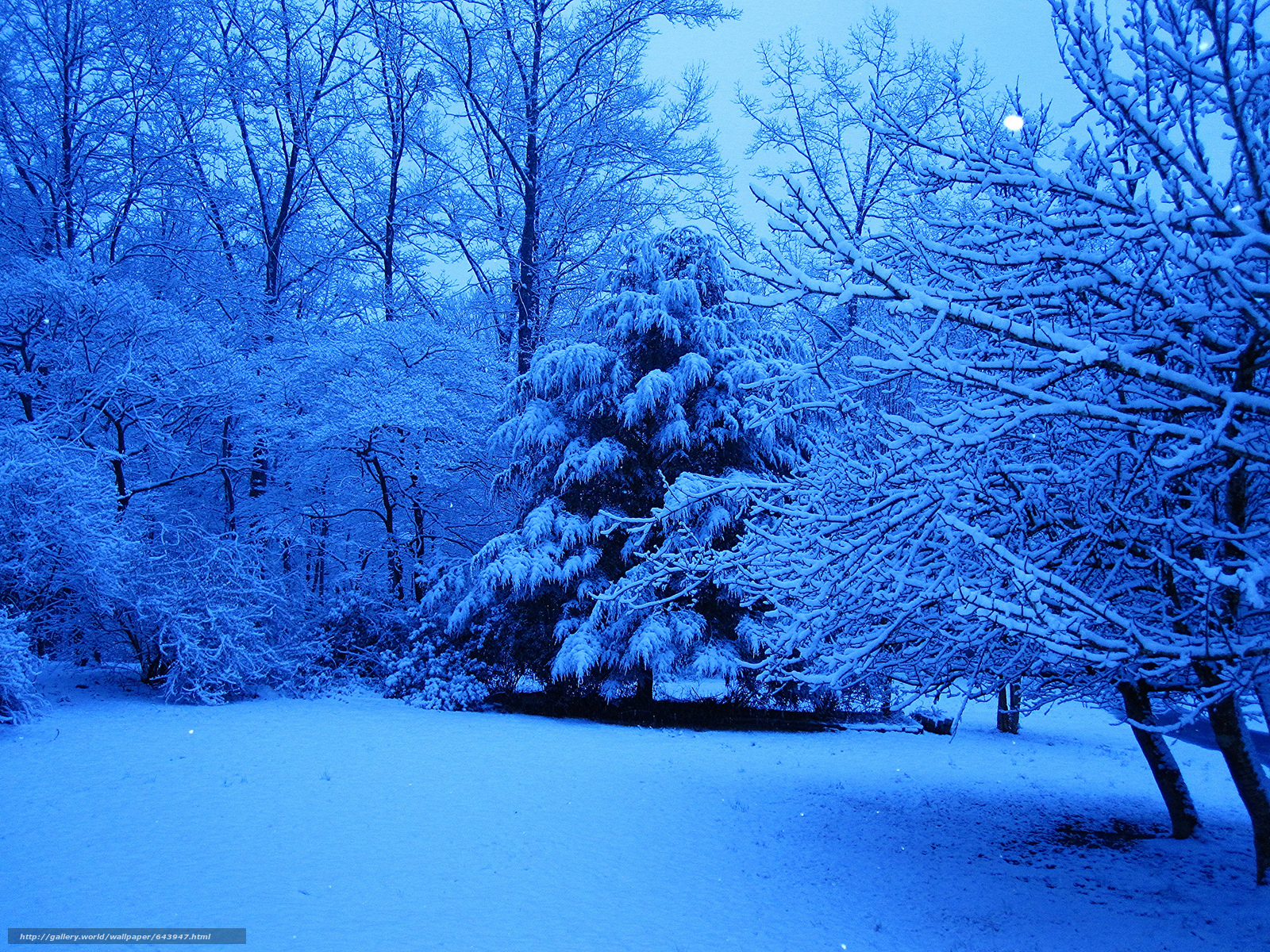 Download wallpaper forest,  park,  winter,  trees free desktop wallpaper in the resolution 2048x1536 — picture №643947