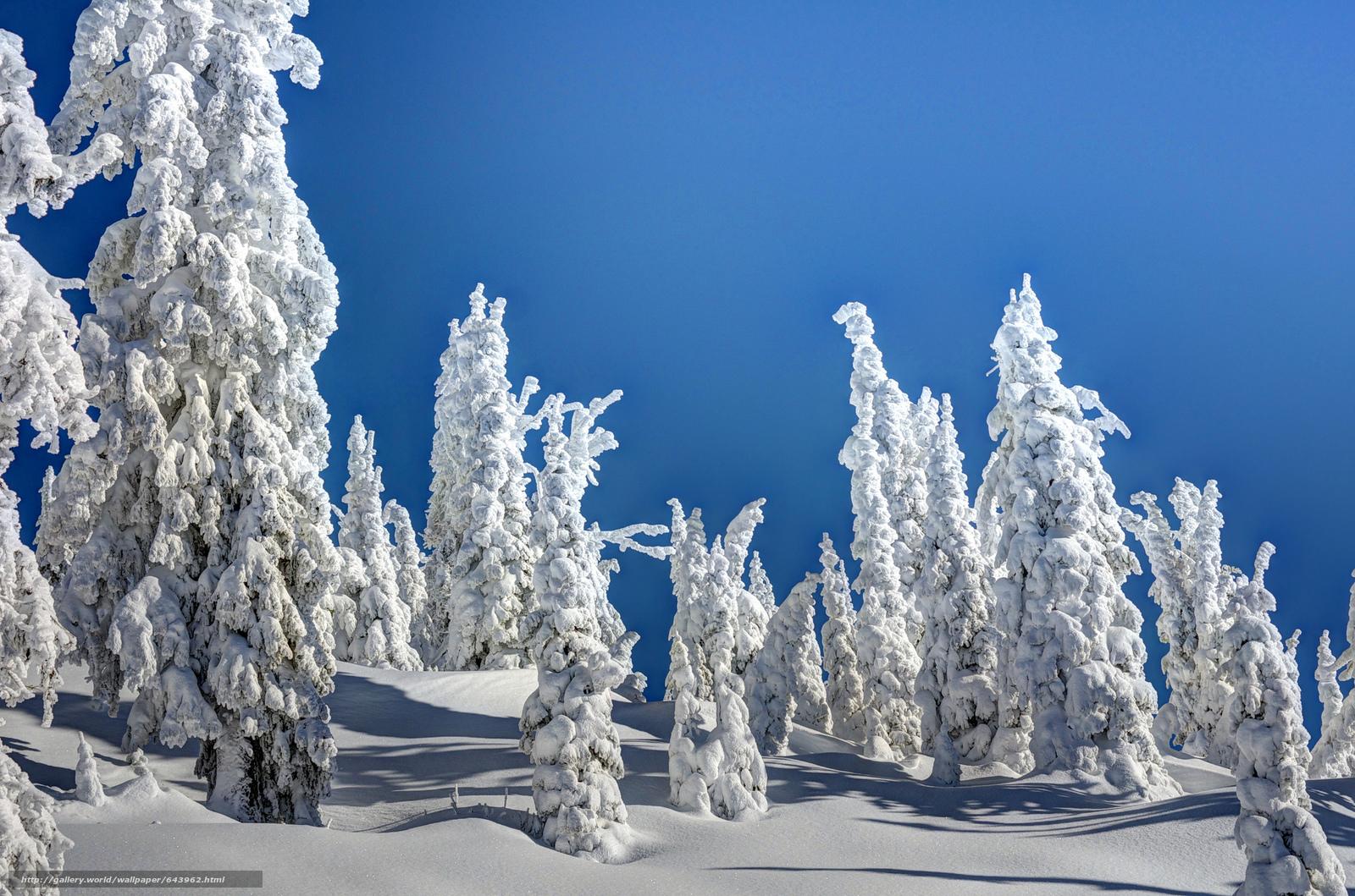 Tlcharger Fond d'ecran hiver,  coucher du soleil,  neige,  arbres Fonds d'ecran gratuits pour votre rsolution du bureau 2048x1356 — image №643962