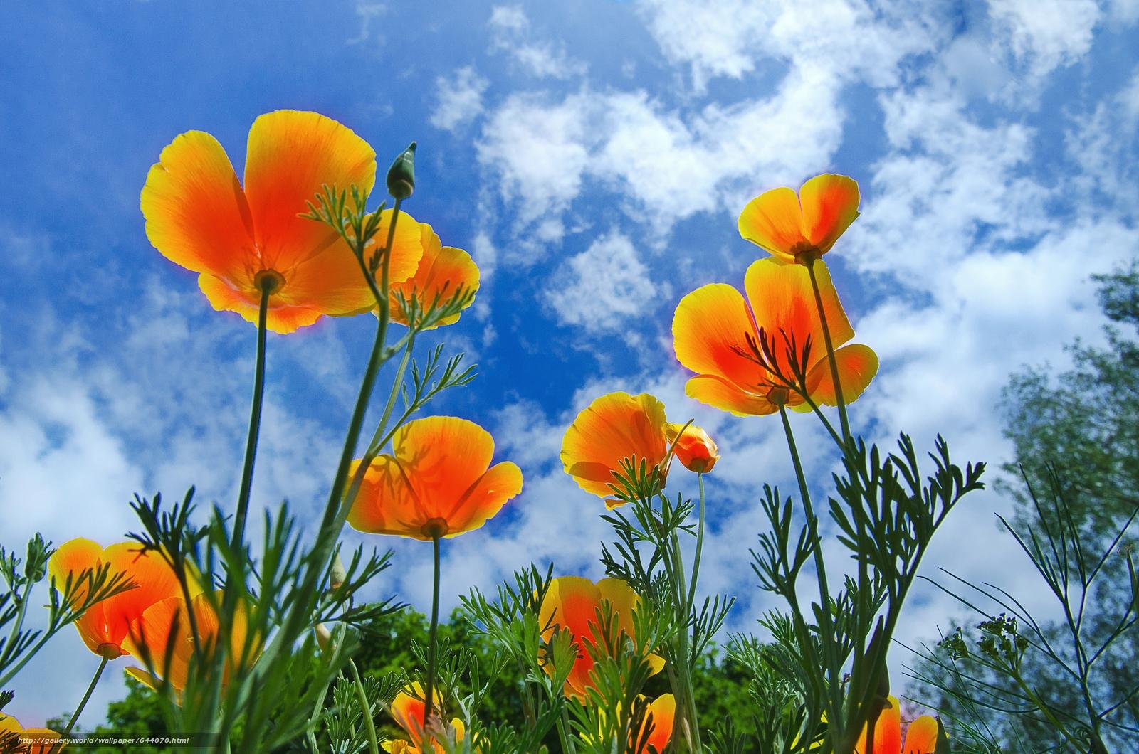 Download wallpaper Flowers,  sky,  flora free desktop wallpaper in the resolution 4928x3264 — picture №644070