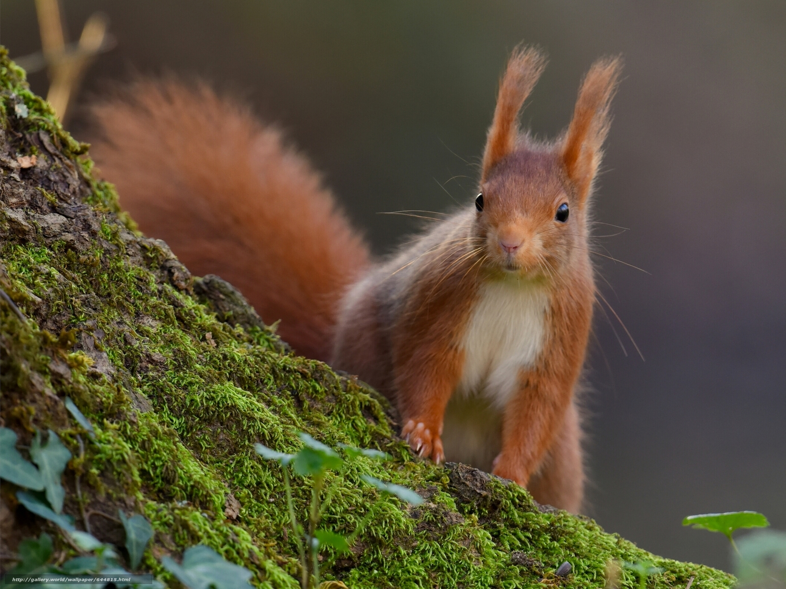 Download wallpaper squirrel,  Redhead,  moss free desktop wallpaper in the resolution 2560x1920 — picture №644815