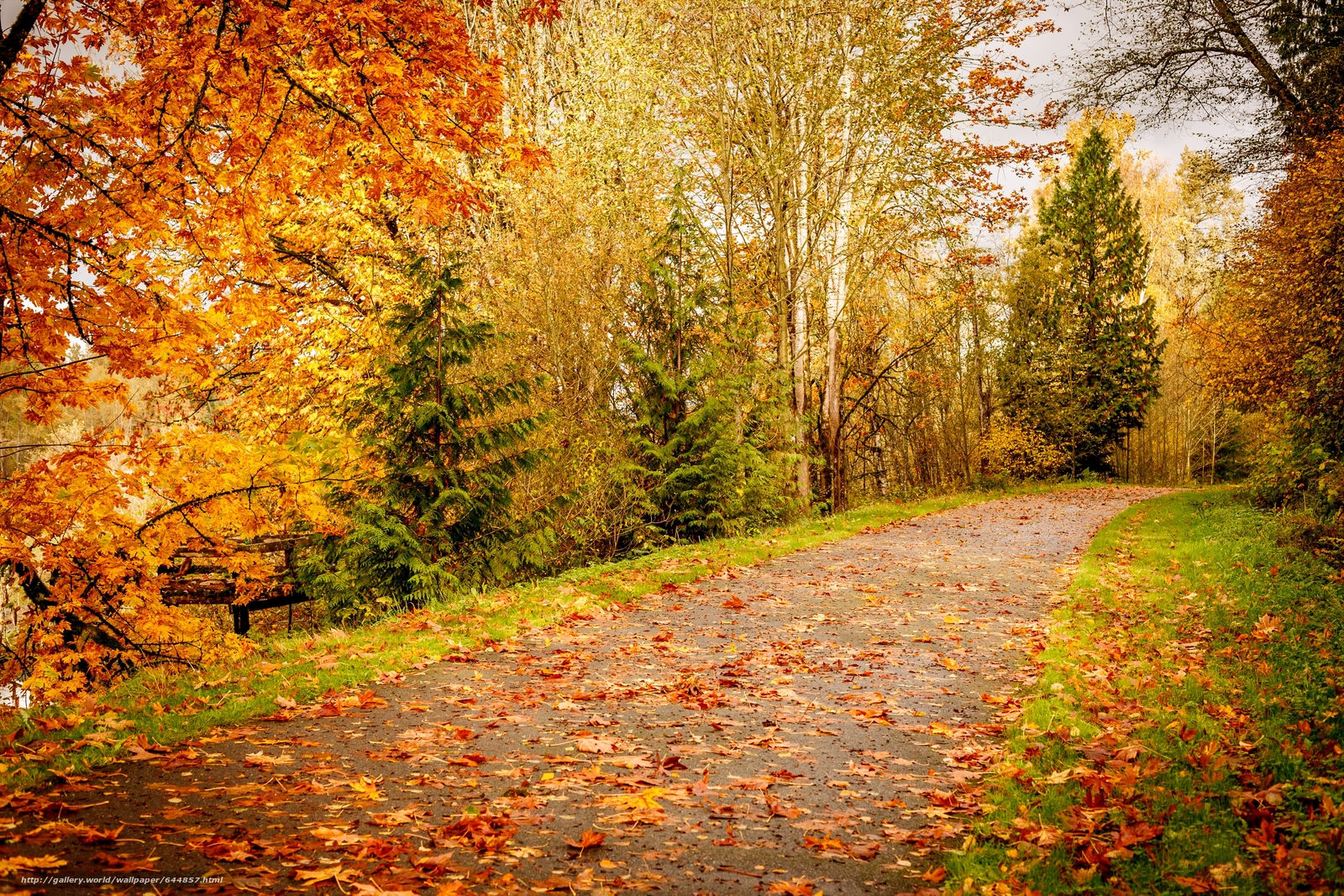 Download wallpaper Indian summer,  road,  forest,  trees free desktop wallpaper in the resolution 4368x2912 — picture №644857