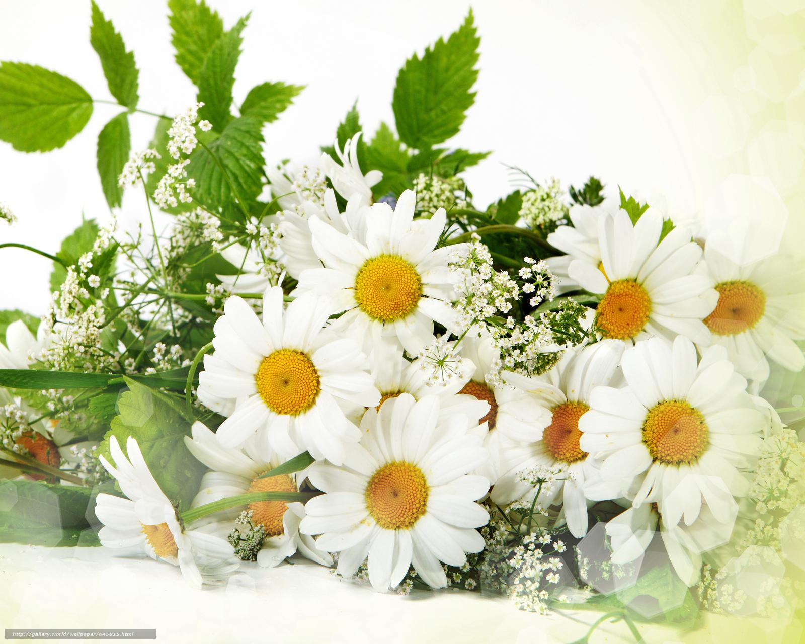 Скачать обои цветы,  букет,  ромашки бесплатно для рабочего стола в разрешении 5822x4657 — картинка №645815
