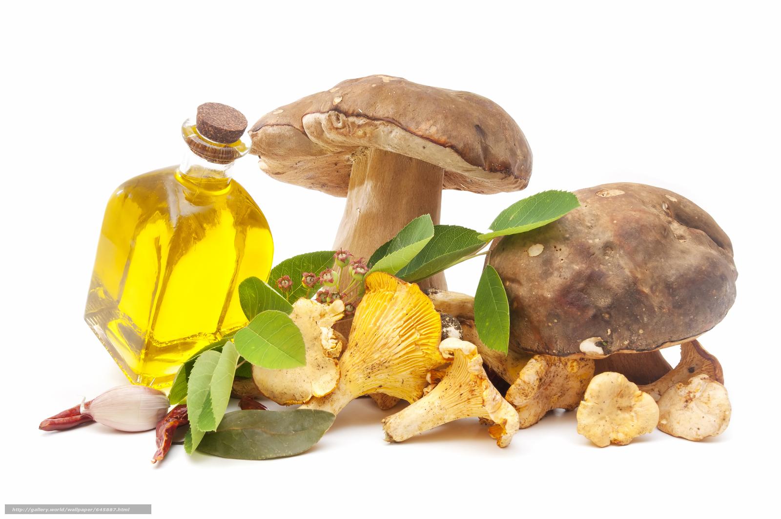 Скачать обои грибы,  белок,  еда,  растительное масло бесплатно для рабочего стола в разрешении 8500x5646 — картинка №645887