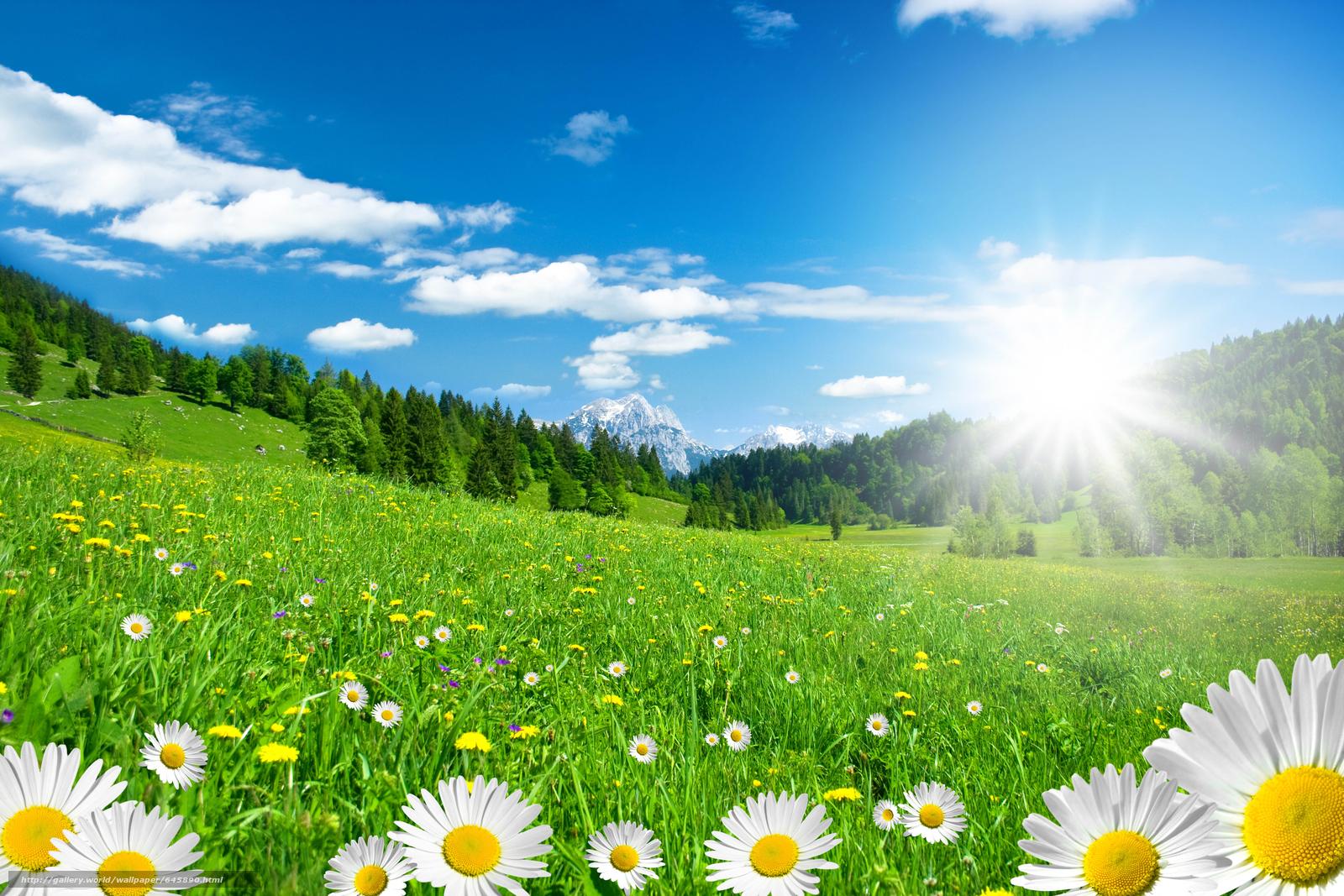 Download wallpaper field,  Chamomile,  Flowers,  flora free desktop wallpaper in the resolution 7500x5000 — picture №645890