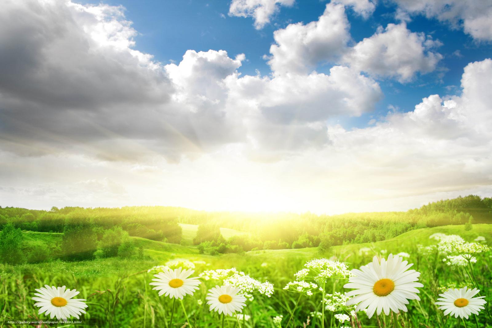 Скачать обои поле,  ромашки,  цветы,  флора бесплатно для рабочего стола в разрешении 7776x5184 — картинка №645893