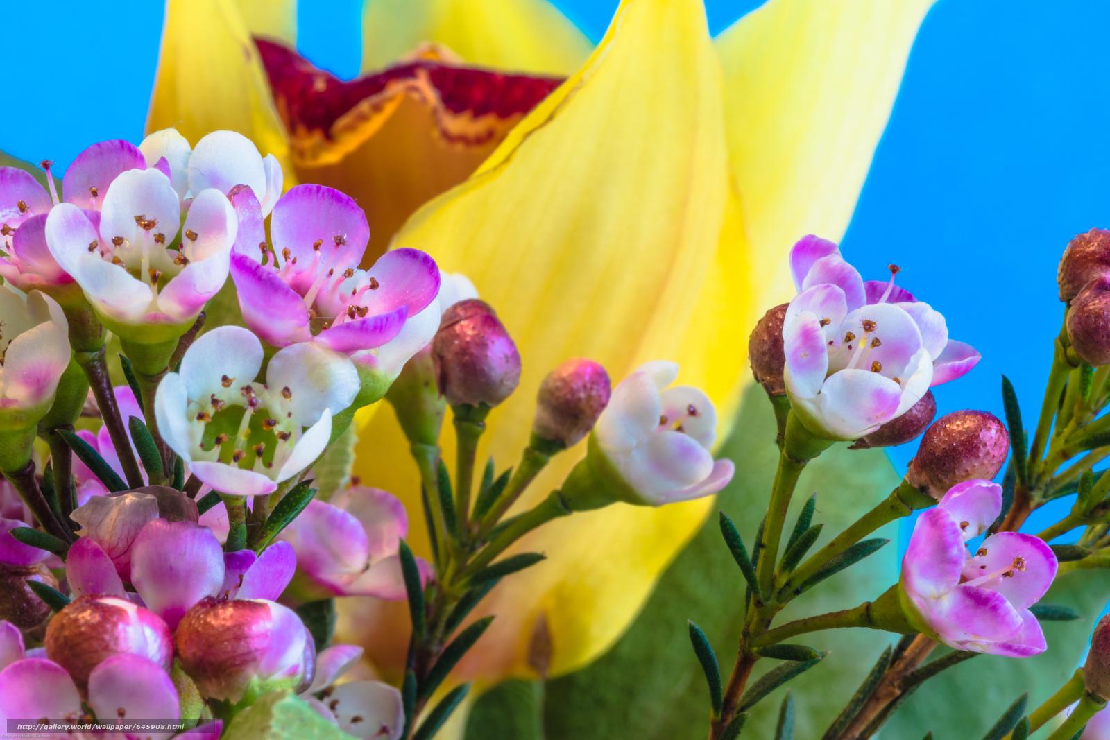 Скачать обои цветы,  флора,  макро бесплатно для рабочего стола в разрешении 6000x4000 — картинка №645908