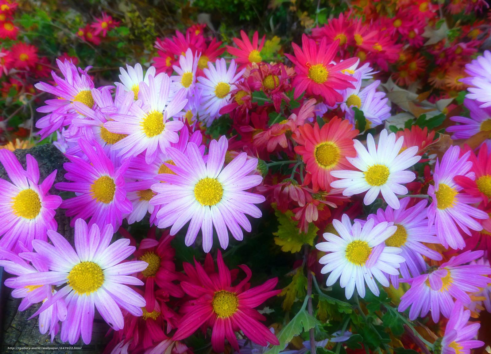 tlcharger fond d 39 ecran parterre de fleurs fleurs flore fonds d 39 ecran gratuits pour votre. Black Bedroom Furniture Sets. Home Design Ideas