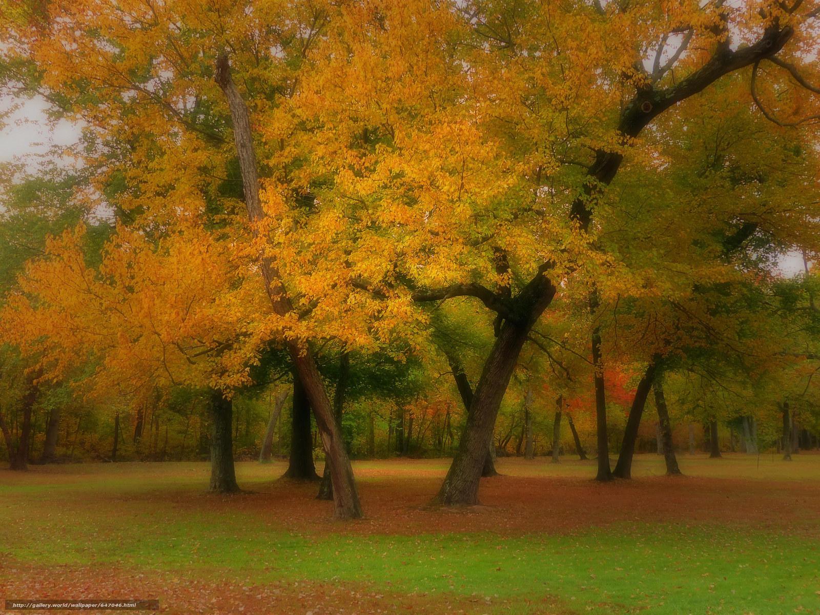 scaricare gli sfondi autunno,  foresta,  alberi,  radura Sfondi gratis per la risoluzione del desktop 2048x1536 — immagine №647046