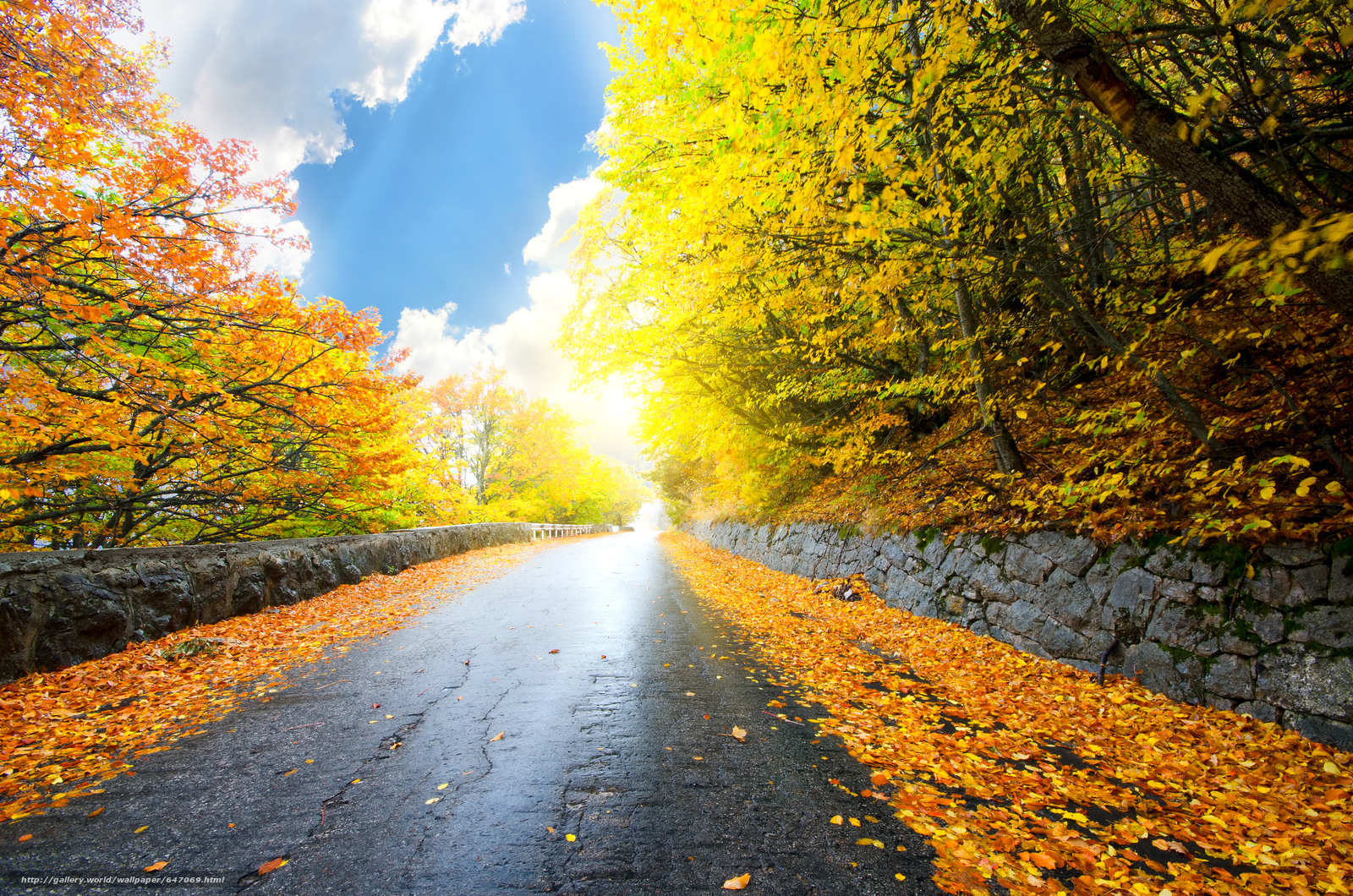 Download wallpaper autumn,  road,  trees,  landscape free desktop wallpaper in the resolution 4928x3264 — picture №647069