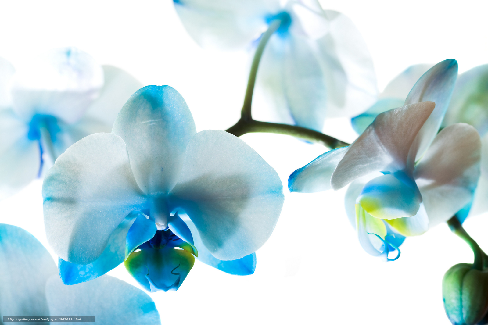 Скачать обои орхидея,  цветок,  макро бесплатно для рабочего стола в разрешении 5500x3666 — картинка №647079