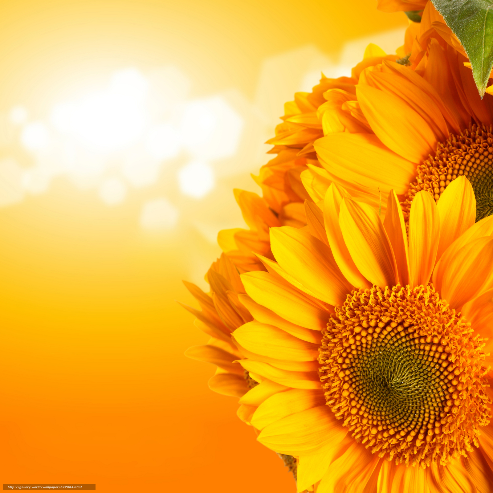 Download wallpaper Sunflowers,  Flowers,  flora free desktop wallpaper in the resolution 6912x6912 — picture №647084