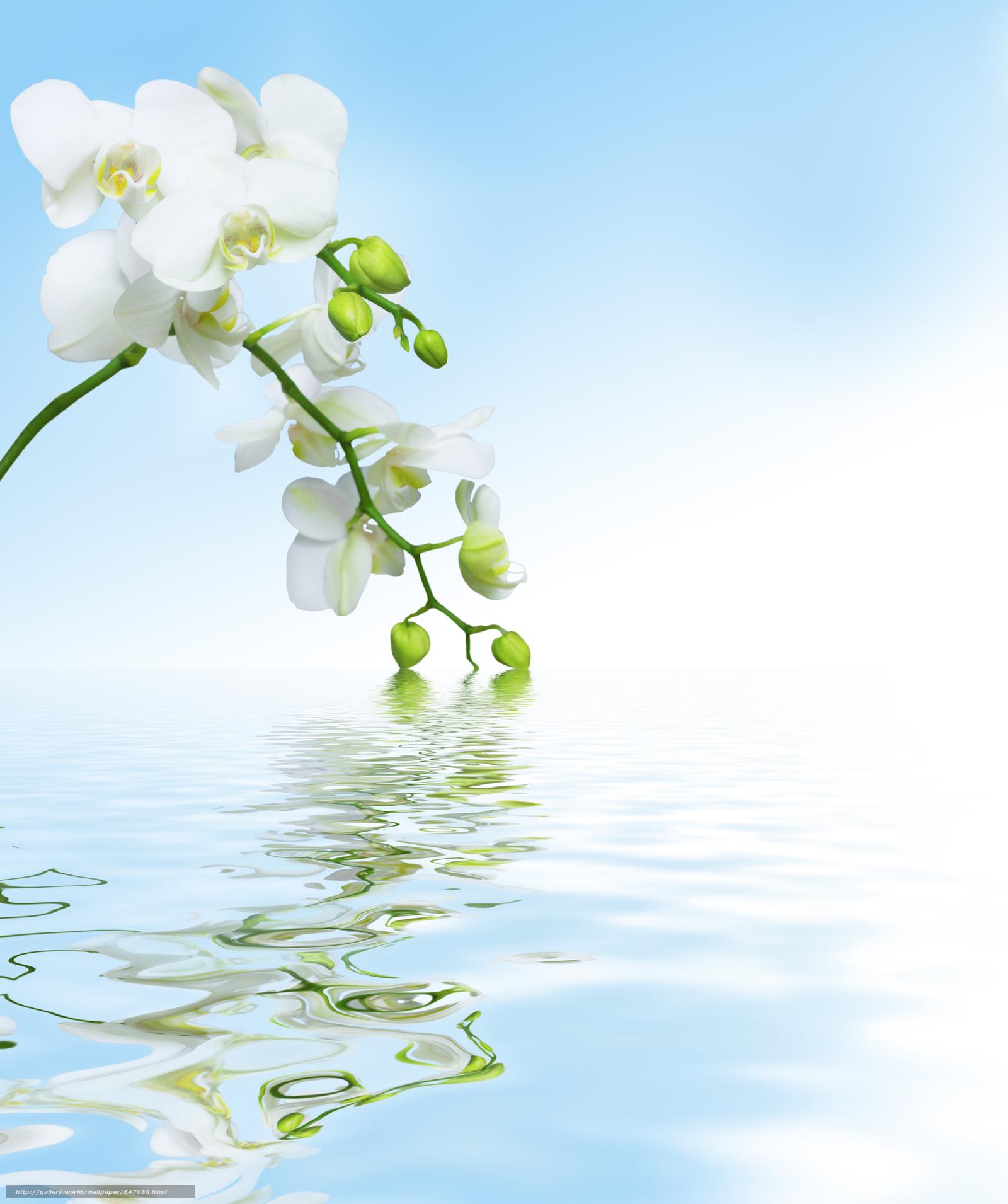 Скачать обои орхидея,  цветок,  флора бесплатно для рабочего стола в разрешении 3798x4536 — картинка №647088