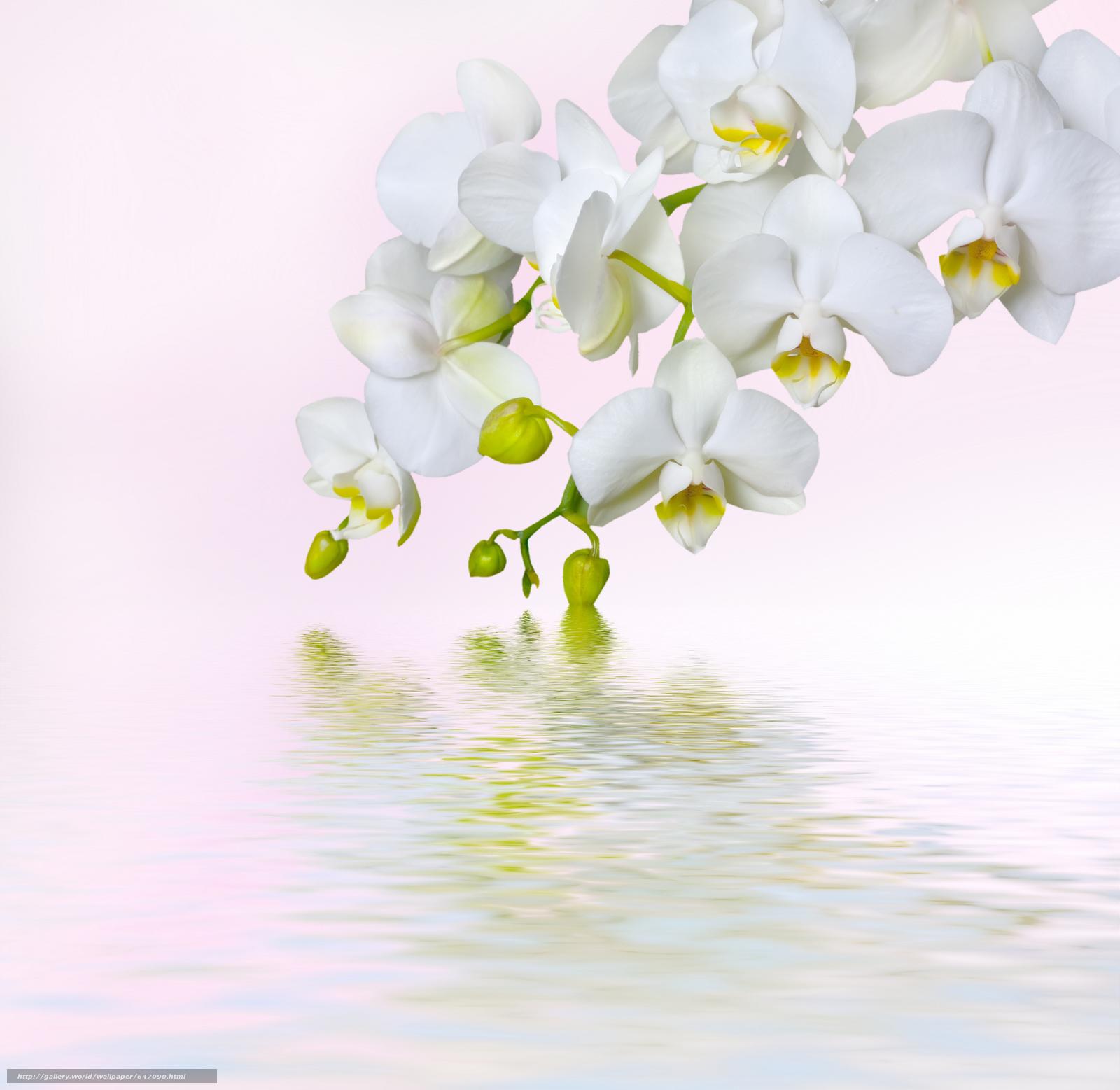 Скачать обои орхидея,  цветок,  флора бесплатно для рабочего стола в разрешении 6144x5978 — картинка №647090