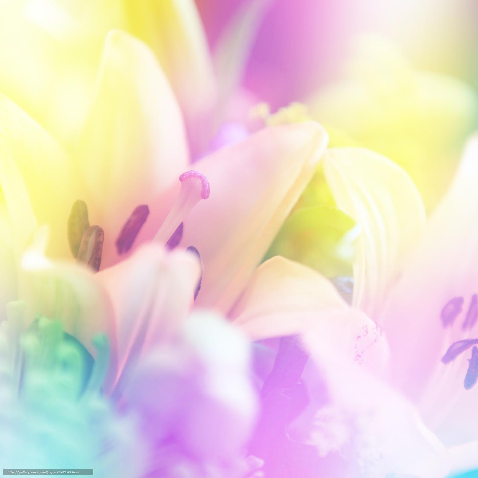 Download wallpaper Flowers,  flora,  Macro free desktop wallpaper in the resolution 4000x4000 — picture №647103