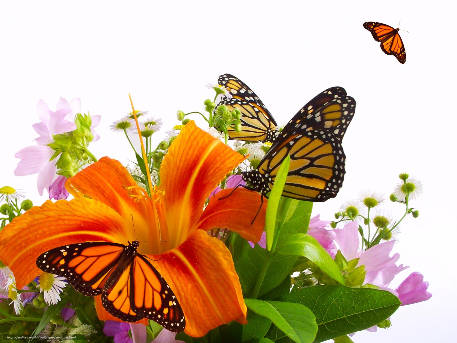 Скачать обои цветы,  лилии,  бабочки бесплатно для рабочего стола в разрешении 5152x3864 — картинка №647110