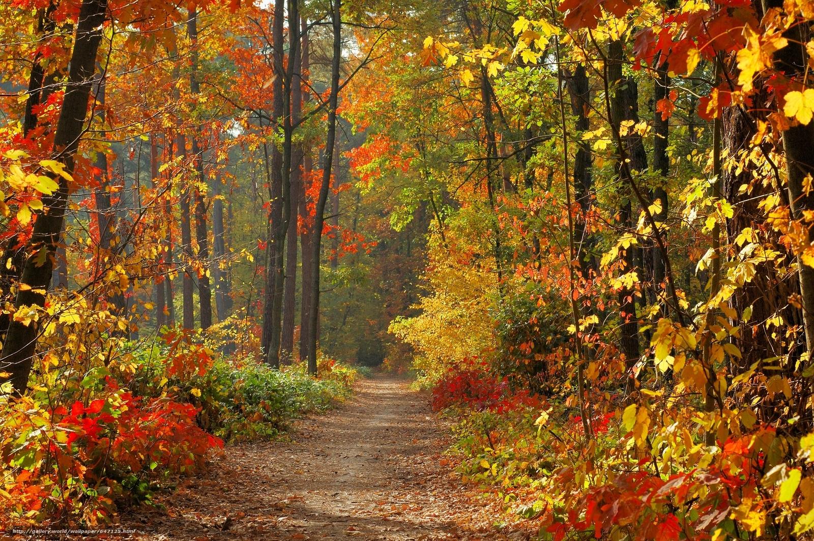 Скачать обои осень,  лес,  дорога,  деревья бесплатно для рабочего стола в разрешении 3008x2000 — картинка №647125
