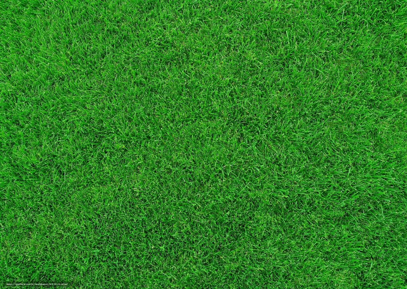 Download wallpaper lawn,  grass,  TEXTURE free desktop wallpaper in the resolution 5628x4000 — picture №647126