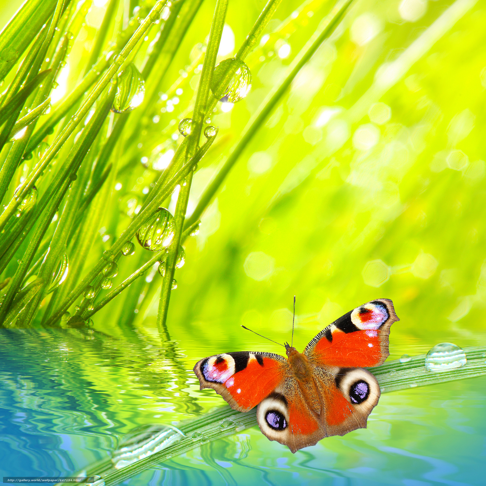 Download wallpaper grass,  butterfly,  dew,  Macro free desktop wallpaper in the resolution 4120x4120 — picture №647154