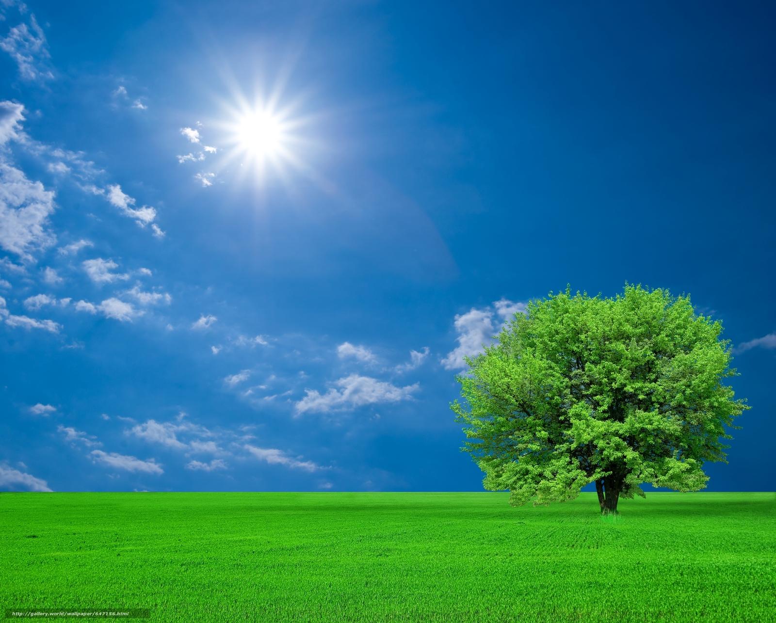 Download wallpaper field,  tree,  landscape free desktop wallpaper in the resolution 7744x6220 — picture №647156