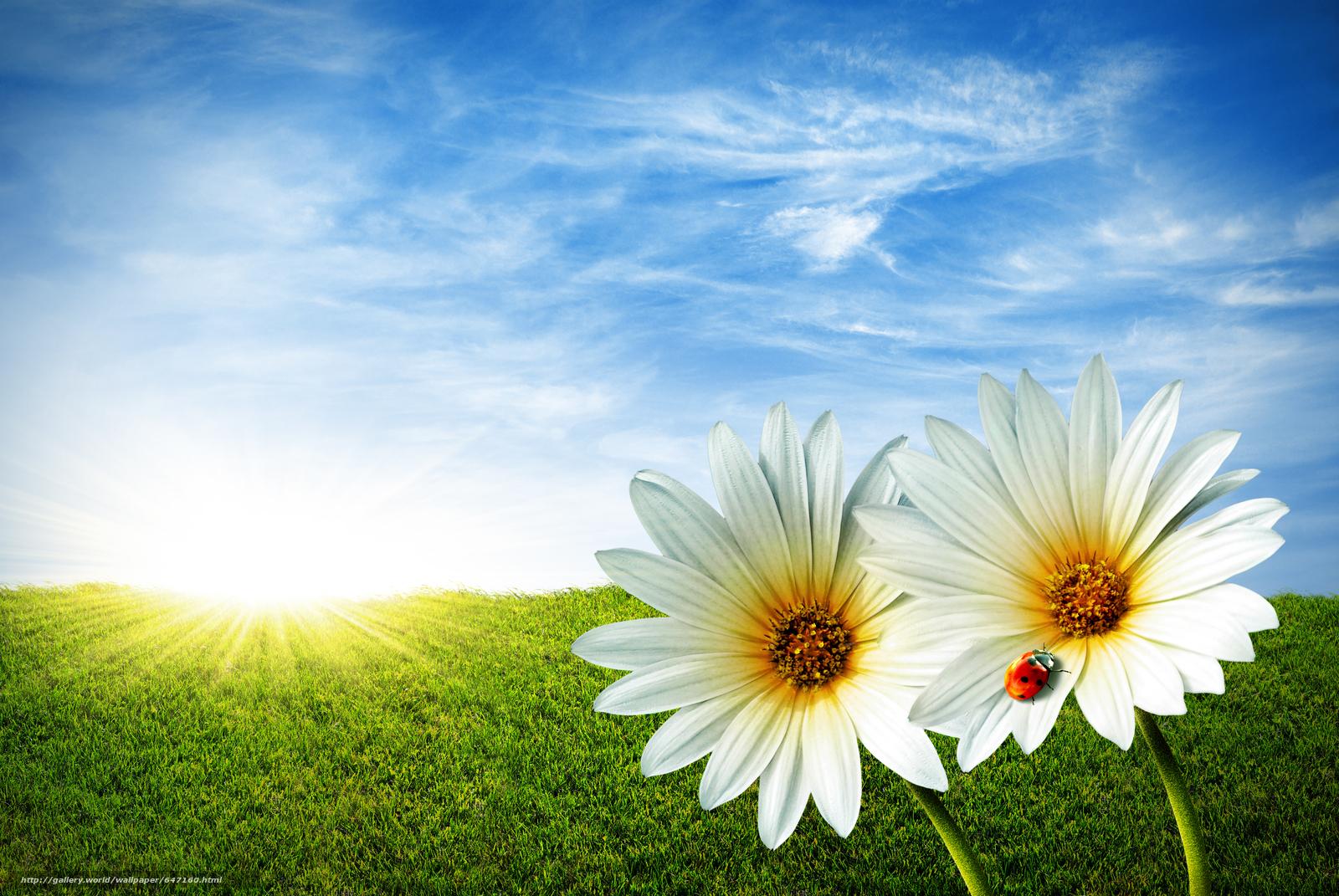 Descargar gratis campo,  hierba,  Flores,  mariquita Fondos de escritorio en la resolucin 3872x2592 — imagen №647160