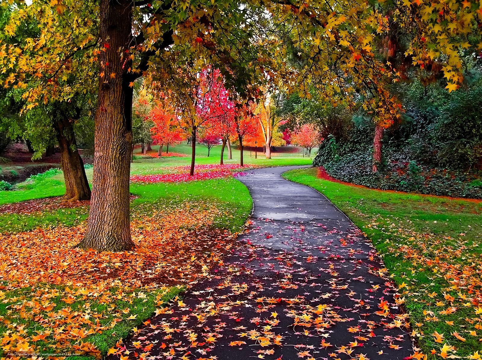 scaricare gli sfondi autunno,  stradale,  parco,  alberi Sfondi gratis per la risoluzione del desktop 4700x3518 — immagine №647191
