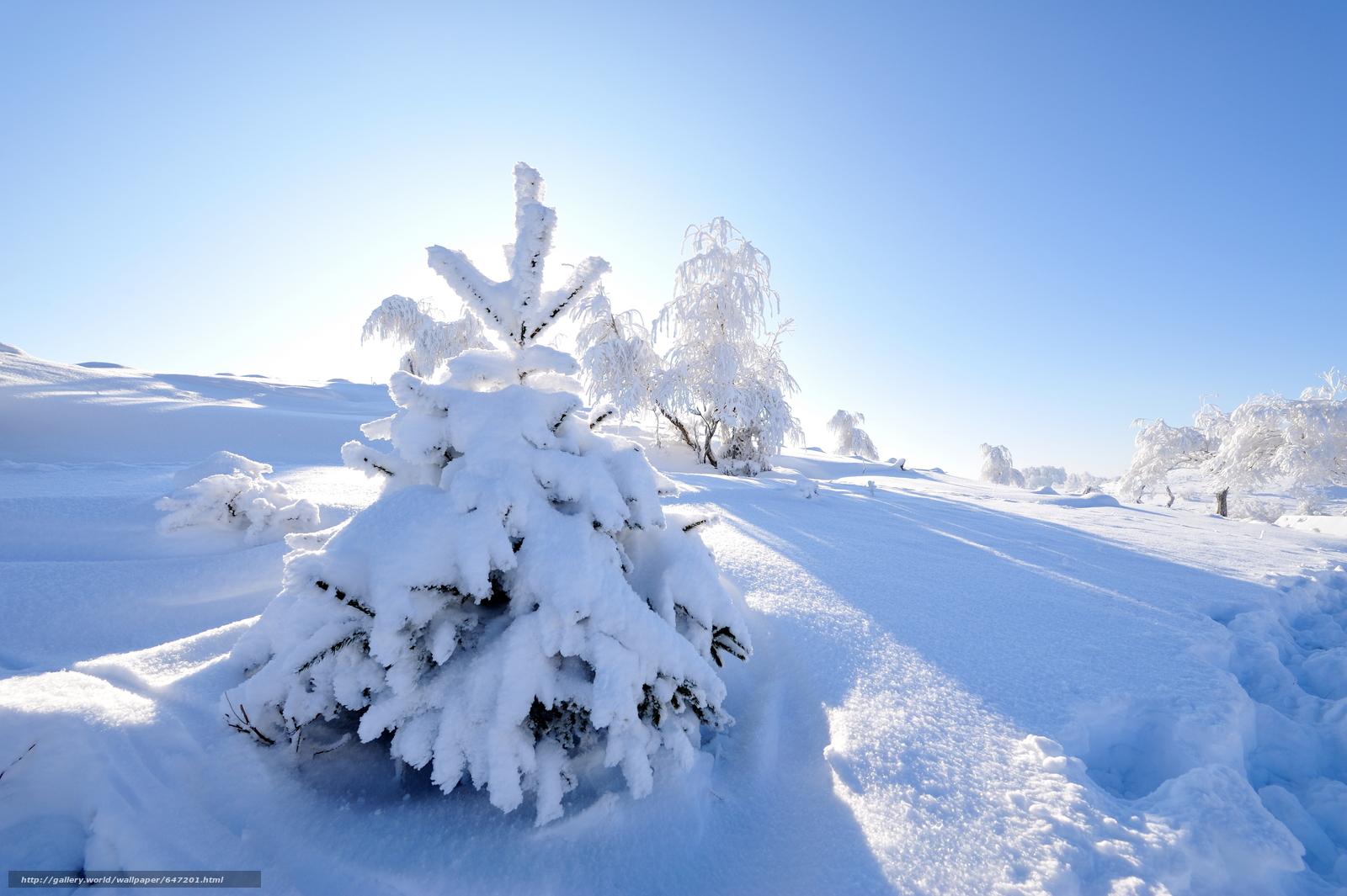 Скачать обои зима,  сугробы,  снег,  деревья бесплатно для рабочего стола в разрешении 8512x5664 — картинка №647201