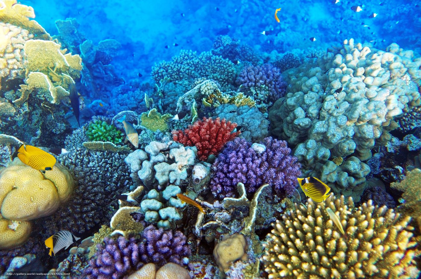 Скачать обои море,  морское дно,  рыбы,  природа бесплатно для рабочего стола в разрешении 5000x3313 — картинка №647228
