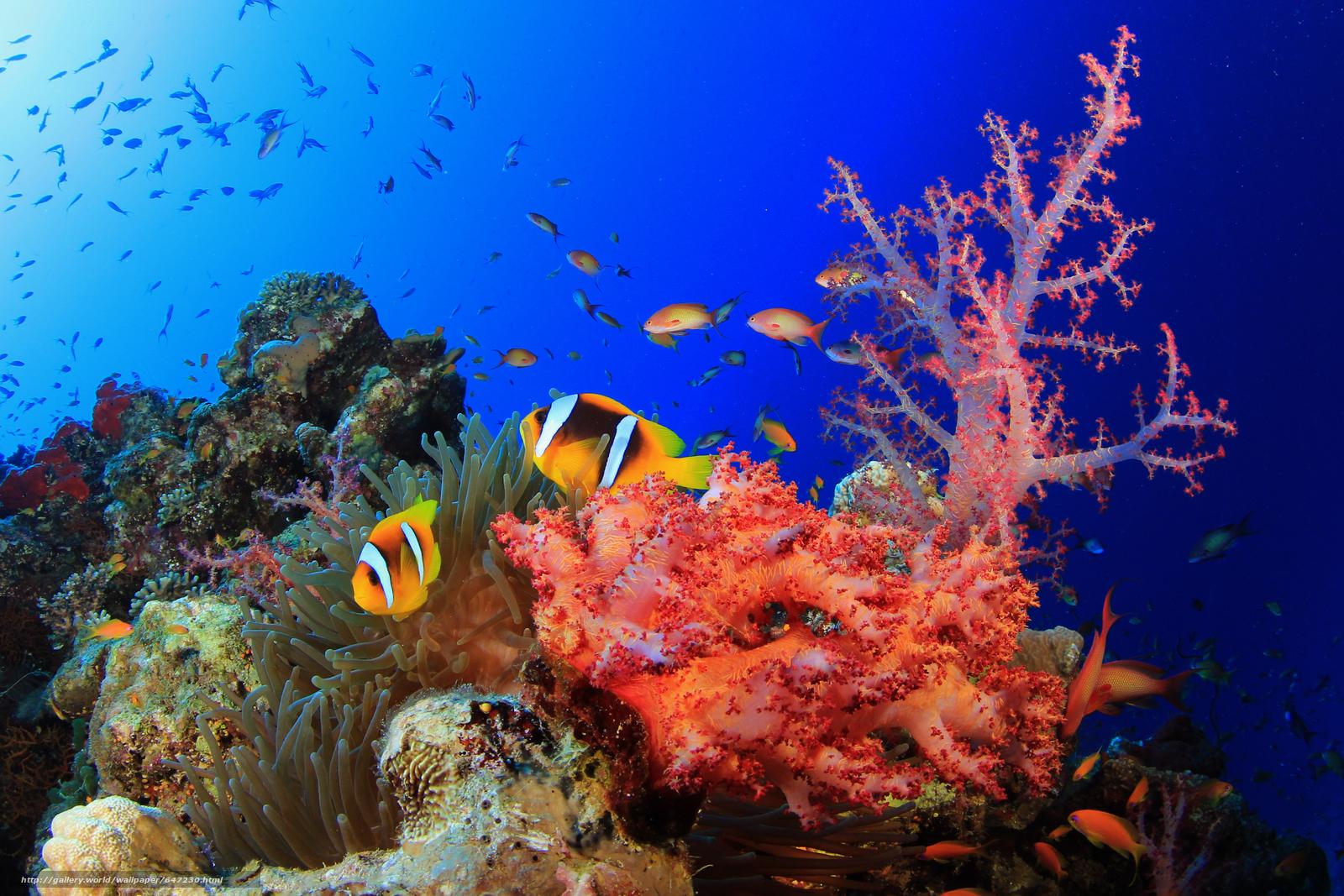 Скачать обои море,  морское дно,  рыбы,  природа бесплатно для рабочего стола в разрешении 4139x2759 — картинка №647230