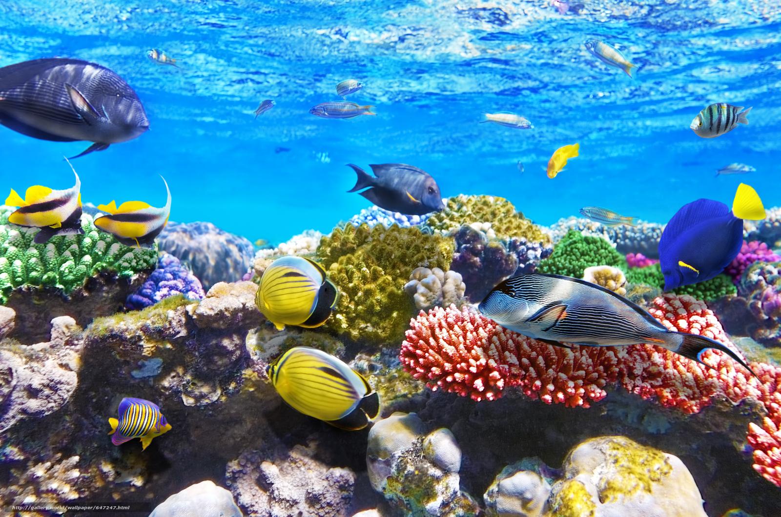 Скачать обои море,  морское дно,  рыбы,  природа бесплатно для рабочего стола в разрешении 4200x2782 — картинка №647247