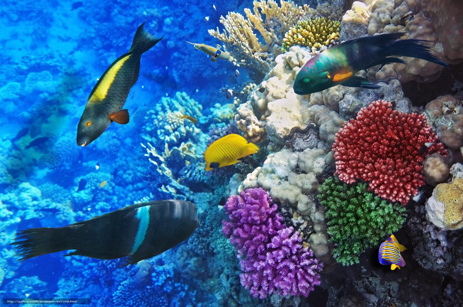 Скачать обои море,  морское дно,  рыбы,  природа бесплатно для рабочего стола в разрешении 4000x2650 — картинка №647248