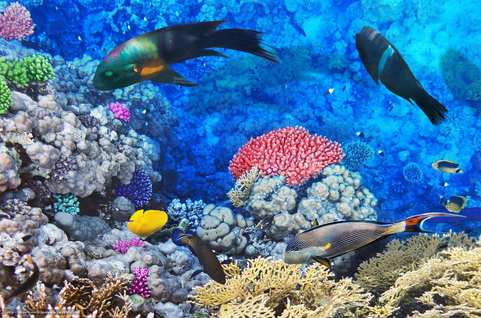 Скачать обои море,  морское дно,  рыбы,  природа бесплатно для рабочего стола в разрешении 4200x2783 — картинка №647251