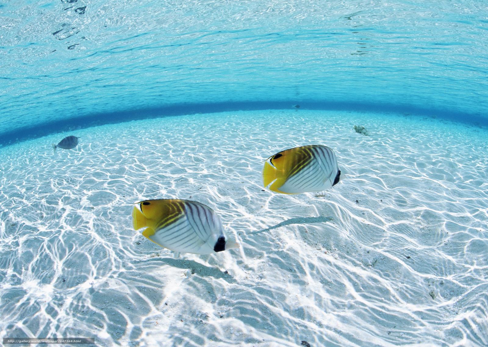Скачать обои море,  океан,  вода,  рыбки бесплатно для рабочего стола в разрешении 2950x2094 — картинка №647268