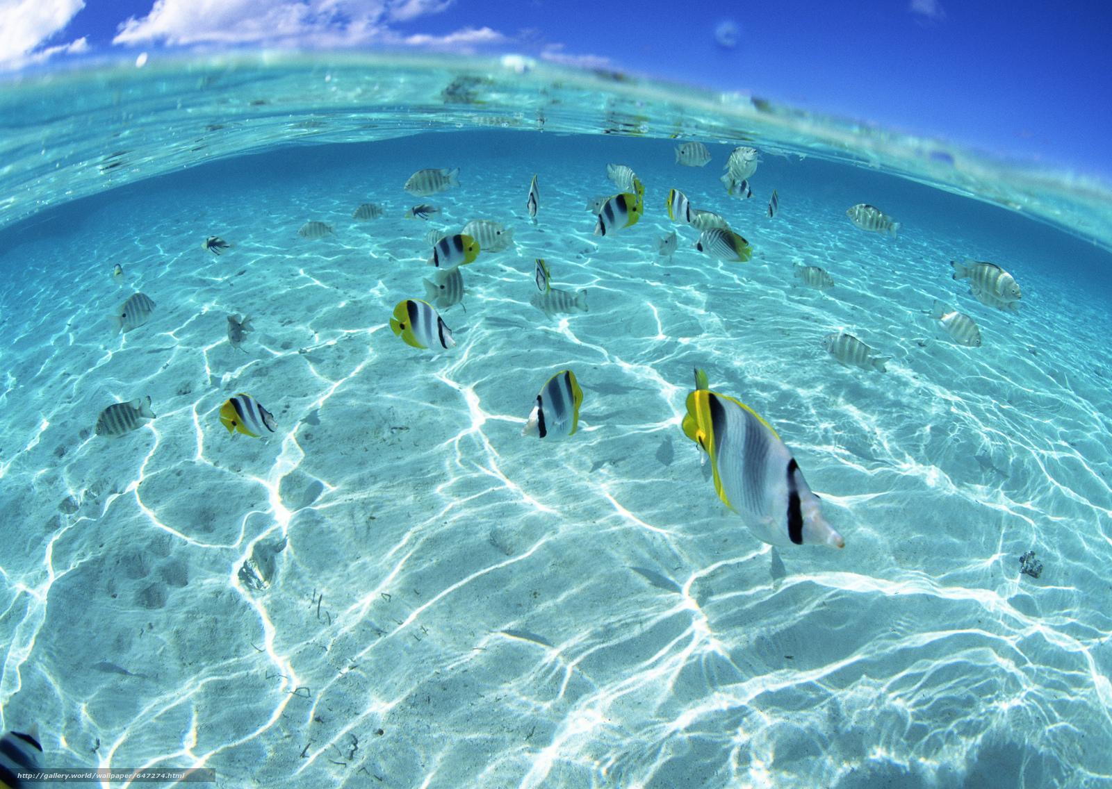 Скачать обои море,  океан,  вода,  рыбки бесплатно для рабочего стола в разрешении 2950x2094 — картинка №647274