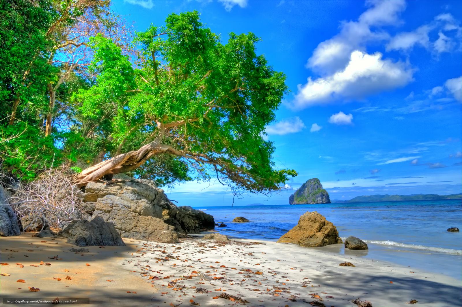 Скачать обои море,  берег,  скалы,  дерево бесплатно для рабочего стола в разрешении 7280x4850 — картинка №647299