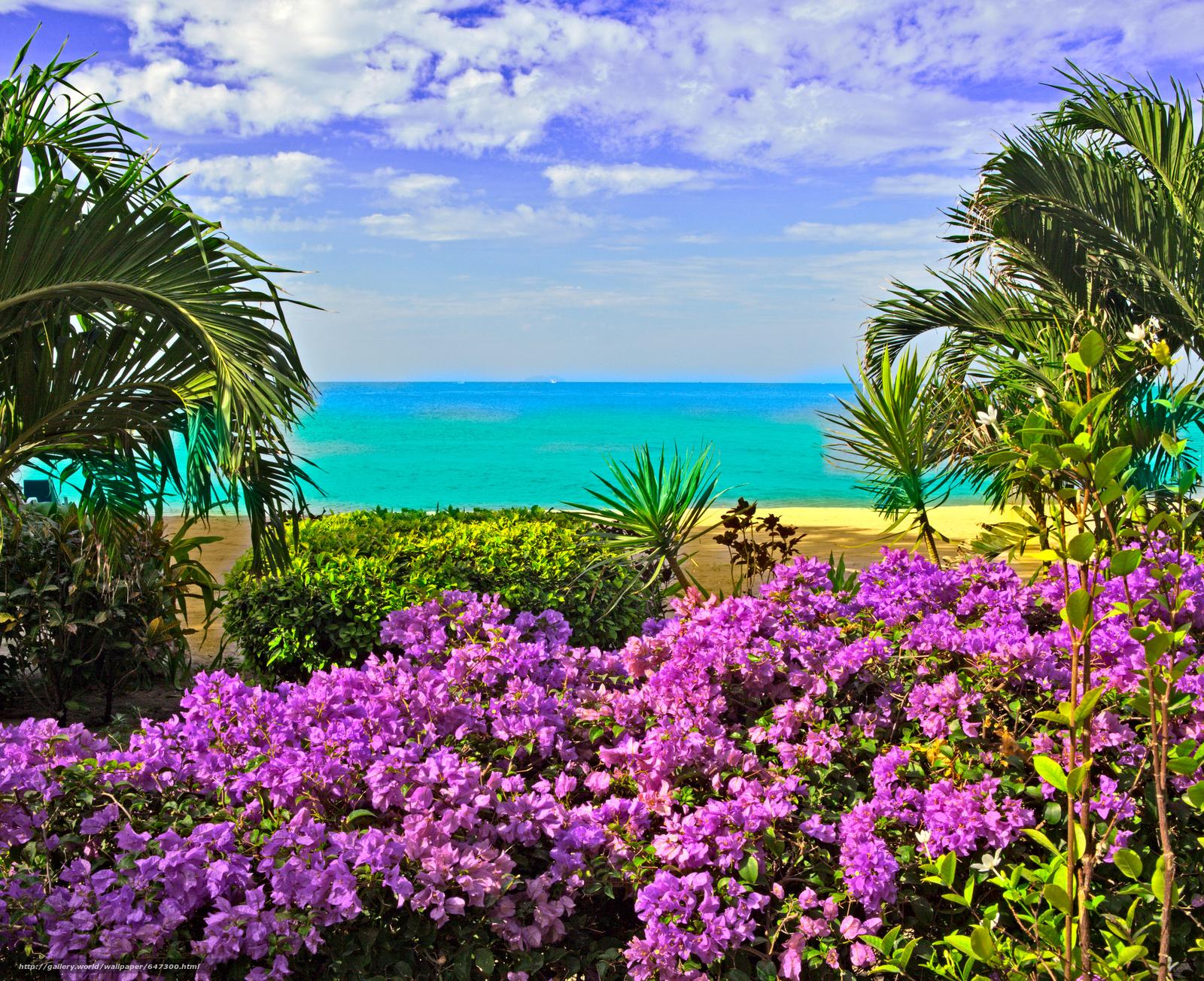 Скачать обои море,  берег,  цветы,  пальмы бесплатно для рабочего стола в разрешении 5782x4712 — картинка №647300