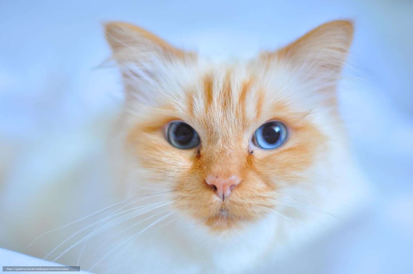 scaricare gli sfondi COTE,  gatto,  museruola,  visualizzare Sfondi gratis per la risoluzione del desktop 4288x2848 — immagine №647313