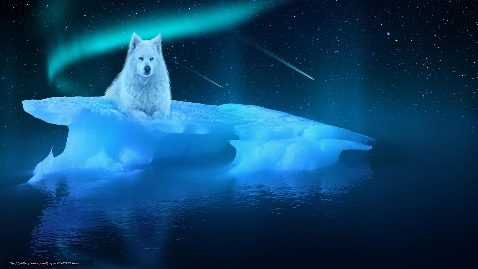 scaricare gli sfondi notte,  lastrone di ghiaccio,  lupo bianco Sfondi gratis per la risoluzione del desktop 2560x1440 — immagine №647327
