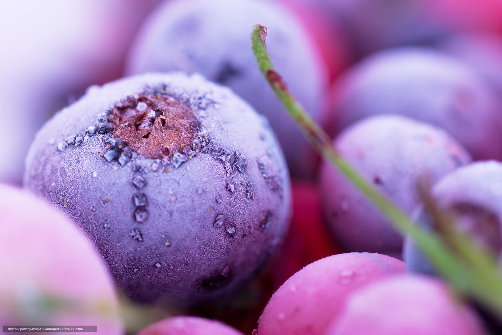 Download wallpaper Macro View of Frozen Berries,  frozen berries,  frost free desktop wallpaper in the resolution 8000x5334 — picture №647679