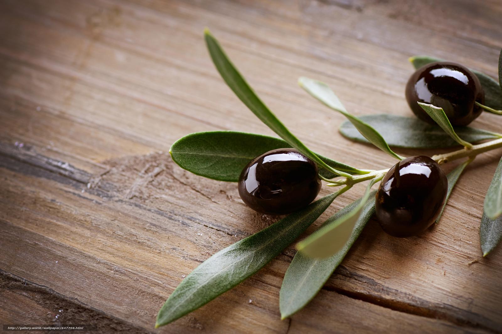 Скачать обои Olives,  оливки,  ветка,  листья бесплатно для рабочего стола в разрешении 8512x5664 — картинка №647708