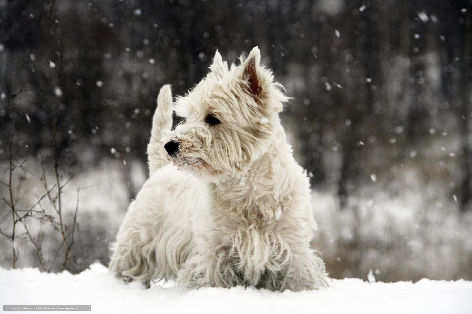 Скачать обои собака,  собаки,  пёс,  животные бесплатно для рабочего стола в разрешении 5100x3400 — картинка №648348