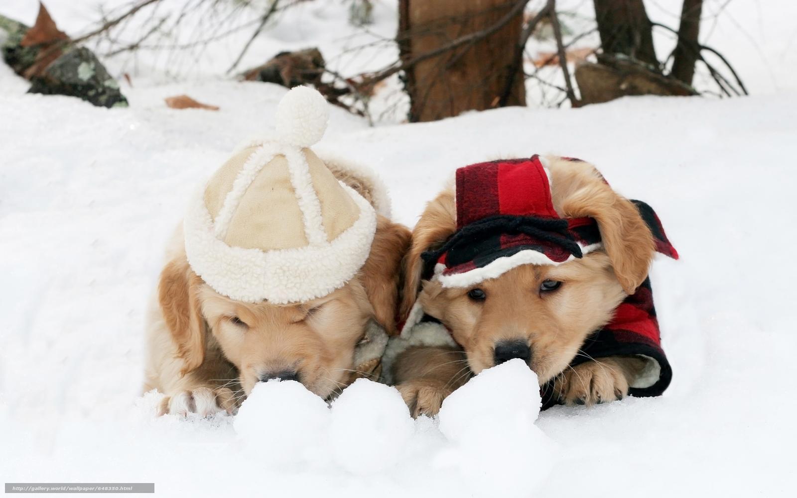 Скачать обои собака,  собаки,  животные,  щенок бесплатно для рабочего стола в разрешении 5592x3500 — картинка №648350